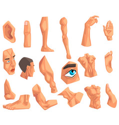 Male body parts set of on a vector