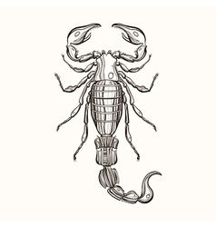 Hand drawn engraving Sketch of Scorpion for tattoo vector image vector image