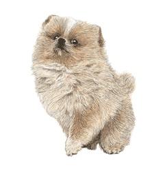 Dog 11 vector image