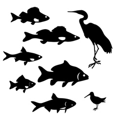Fish and birds vector