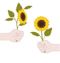 Hands with sunflowers isolated icon vector