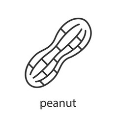 Peanut linear icon vector