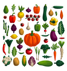 vegetables set variety decorative vegetables vector image