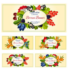 berry and fruit banner set for food label design vector image vector image