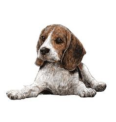 Dog 14 vector