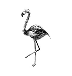hand drawn black and white flamingo vector image