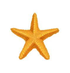 icon of bright orange ocean starfish sea animal vector image