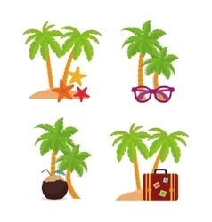 Palm tree and summer design vector image vector image
