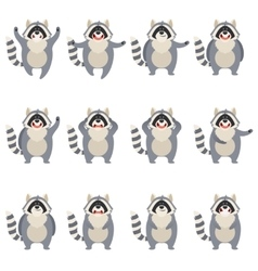Set of flat racoon icons vector