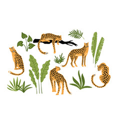 set of leopards and tropical leaves vector image