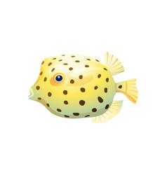 spherical boxfish isolated on white background vector image