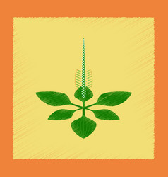 Flat shading style icon plant plantago vector