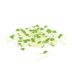 Fresh Mung Beans Sprouts on White Background vector