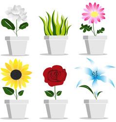 Plant in flower pot vector
