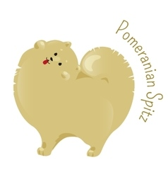 Pomeranian spitz isolated on white background vector