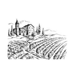 Rows of vineyard grape plants and castle vector