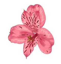 Bright pink alstroemeria with watercolor effect vector
