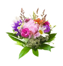 Colorful flowers bouquet isolated on white vector image