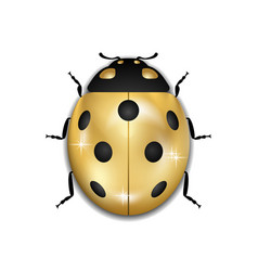 Ladybug gold insect small icon golden lady bug vector