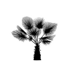 sketch palm tree hand drawn silhouette palm tree vector image