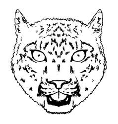 Snow leopard roar face or head hand drawn leopard vector