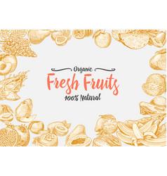 vintage hand drawn fresh fruits background vector image