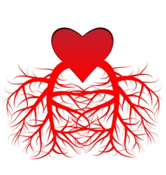 The heart and the veins vector image