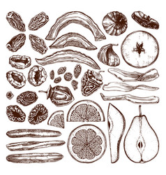 dried fruits and berries collection hand drawn vector image