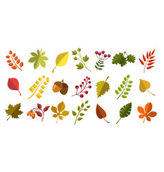 fall acorns leaves berries vector image