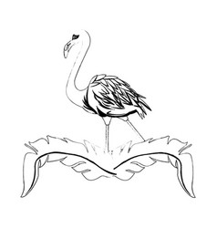 Flamingo bird icon image vector