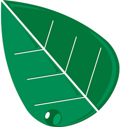 green leaf icon graphic vector image