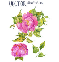 watercolor color flowers peony or rose vector image vector image