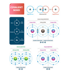 covalent bond labeled diagram vector image