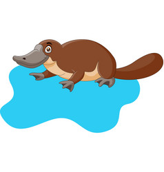 Cute cartoon platypus on water vector