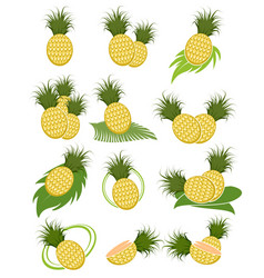 Different variants of pineapples vector