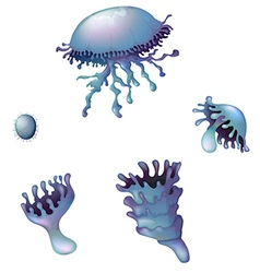 Life cycle of a jellyfish vector