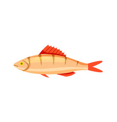 perch fish isolated icon vector image