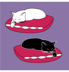 Cats on pillows vector image