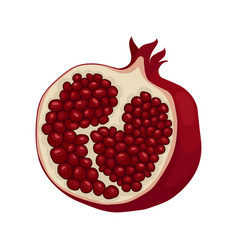 half of ripe pomegranate fruit with sweet juicy vector image