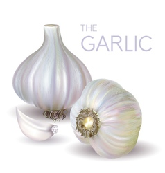 Garlic bulb and slice vector
