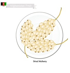 Dried mulberry a popular fruit in afghanistan vector