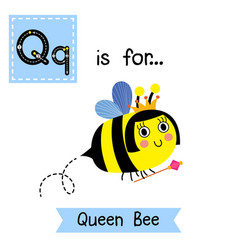 Letter q tracing queen bee holding scepter vector