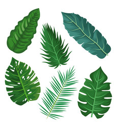 plants and leaves vector image
