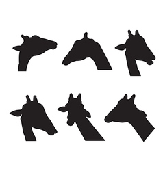 Giraffe Set Silhouettes on the white background vector image