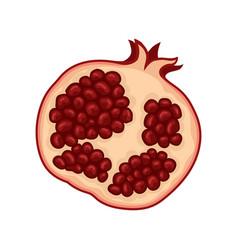 half of fresh pomegranate ripe and tasty fruit vector image