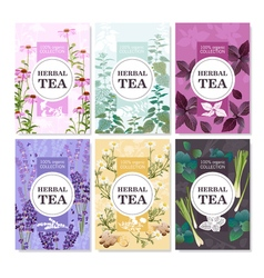 Herbal Tea Colored Banners Set vector image