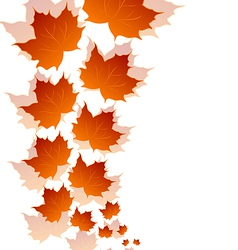 Autumn maple leaves isolated on white background vector image