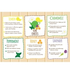Home remedies infographics Natural healers vector image