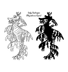 leafy seadragon vector image