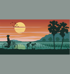 Vietnamese woman ride bicycle pass rice field vector